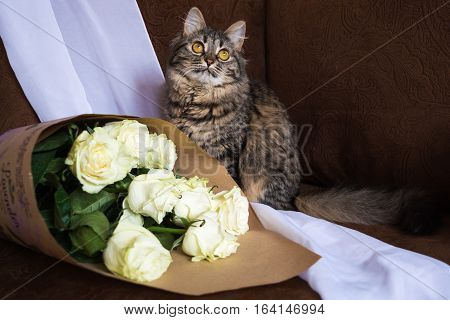Cat With Bouquet.
