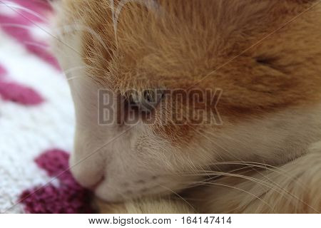 Eye of white and orange cat on red blanket
