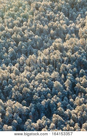 Aerial view of coniferous forest during a winter day.