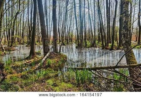 Spillage small deciduous forest river in the spring in Poland