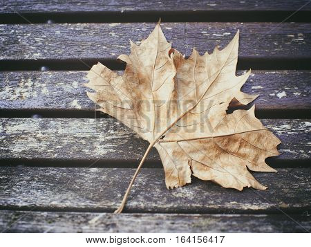 Autumn season. Solitary fallen leaf on the bench.