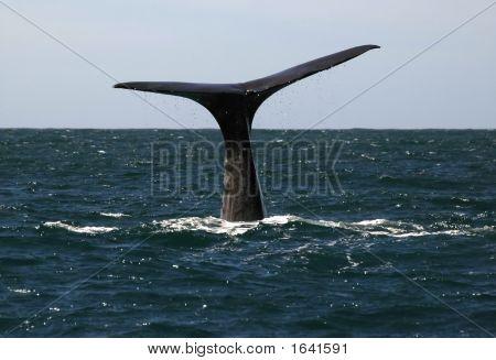 Kaikoura Whale2