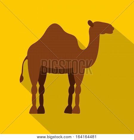 Dromedary camel icon. Flat illustration of dromedary camel vector icon for web isolated on yellow background