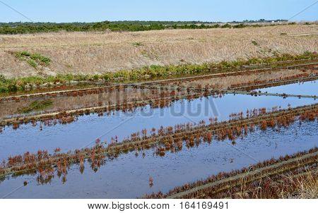 Loix France - september 26 2016 : the picturesque salt evaporation pond