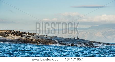 Seal Island In The Middle Of False Bay Near Cape Town In South Africa.