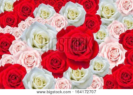 The background image of the Roses - stock photo
