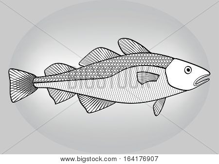 Cod, Black And White Hatched Drawing A Gray Gradient Background