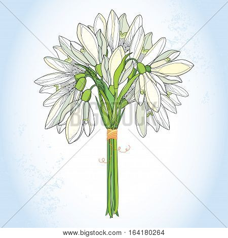 Vector bouquet with ornate Snowdrop or Galanthus in white on the light blue background. Floral elements in contour style for spring design. Floral spring symbol.