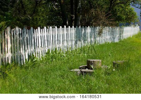 White picket fence in background with grass and tree stumps