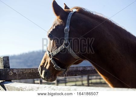 Purebred warmblood stallion looking over fence on a cold winter day. Check out my another equine photos please
