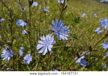 Flowers meadow, Nature, Summer, Sunny, verdure, grass