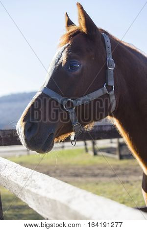 Purebred warm blood stallion looking over fence on a cold winter day. Check out my another equine photos please