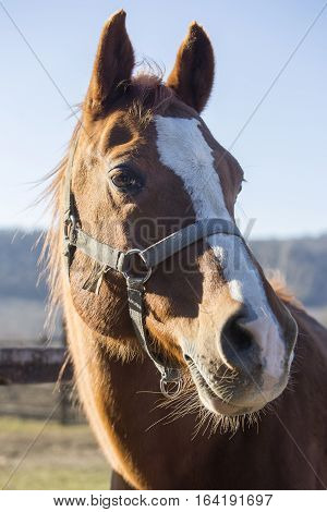 Beautiful portrait of a purebred stallion on animal farm. Check out my another equine photos please