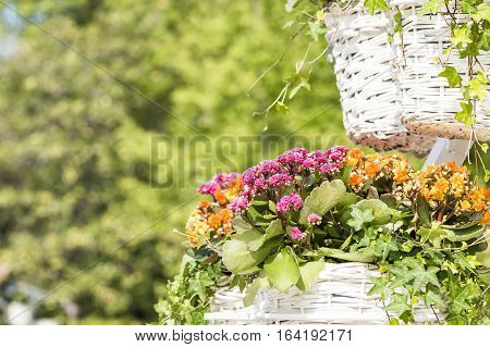 Flowers in hanging pots on the fair