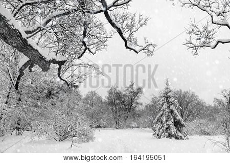 Duotone picture of a winter snowy landscape in Montreal Quebec (Botanical Garden)