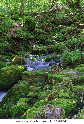 Small streams over mossy rocks in forest
