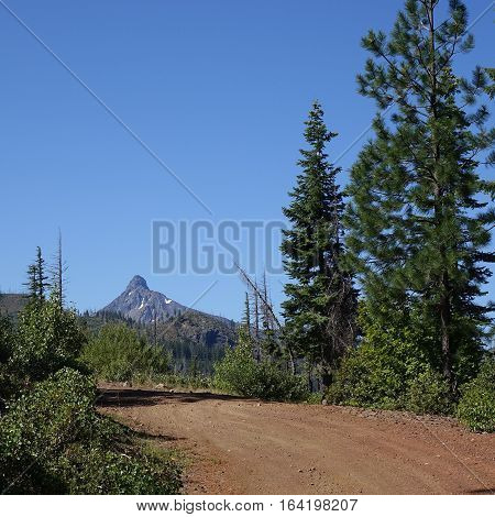 Mt. Washington in Central Oregon's Cascade Mountain Range seen from the dirt Suttle Lake Loop Forest Service Road with manzanita and tall fir and pine trees on a clear summer day.