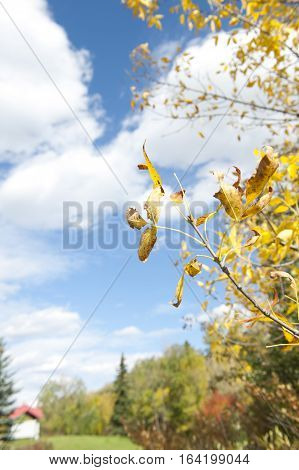 A depth of field view of a park, (Gabriel Dumont Park, Saskatoon, SK, Canada). In September so the leaves are beginning to change colour, you can see in the distance a variety of trees and blue sky with fluffy clouds and a small white utility shed with a