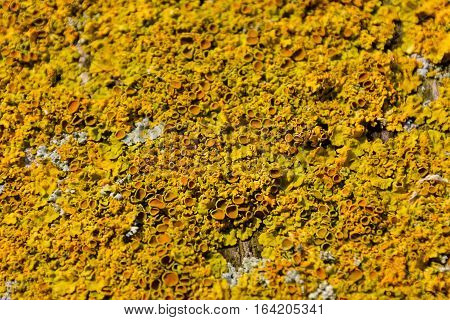 Photo Picture Texture Lichens