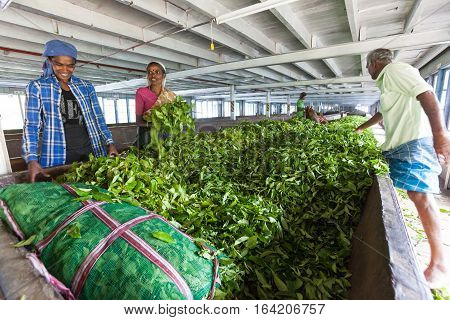 NUWARA ELIYA, SRI LANKA - July 25, 2016: Blue Field Tea factory. Workers at work. Some people are working tea inside the Blue Field Factory. Drying of tea leaves. Location: Blue Field Tea. Sri Lanka.