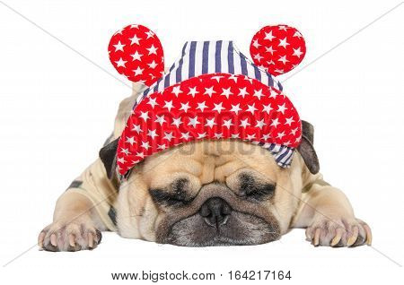 sleeping rest of funny pug dog puppy with hip hop hat. isolated on white background with clipping path