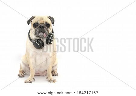 Pug dog listening to music with bluetooth earphone on white background. With copyspace for label text.