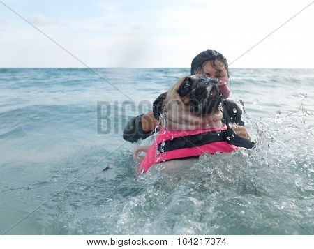 Close-up face cute dog puppy pug fear and afraid water swim on beach Koh Kood Thailand. (Kood Island Trat province)