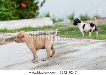 Two Homeless Puppy dog alone on the street with friends.