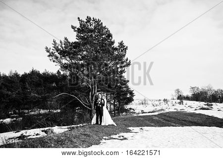 Amazing Young Wedding Couple In Love At Winter Frost And Sunny Day Background Pinewood. Black And Wh