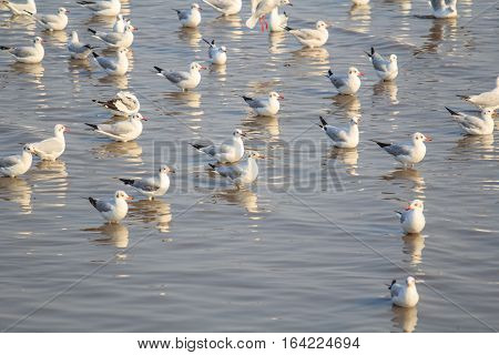 seagull masses at the sea in sunset time