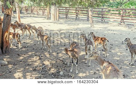 Many Deers On The Ground, Behing Fence, Zoo Garden