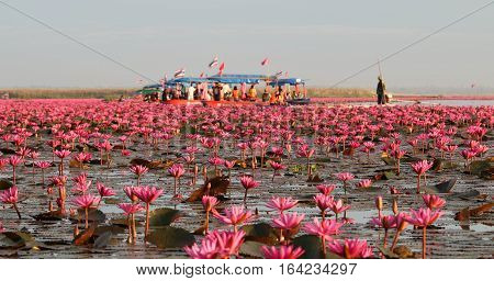 UDON THANI,Thailand - January 7, 2017 : Tourist on the boat in the pond at Kumpawapee, Red lotus in the morning.