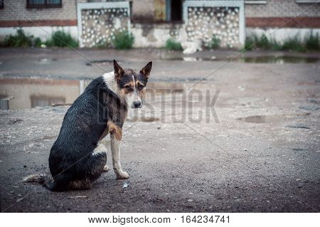 look of the homeless dog sitting on the street under a pouring rain. There is no house, lonely