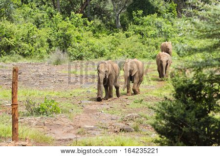 Baby Elephants In Nairobi, Kenya