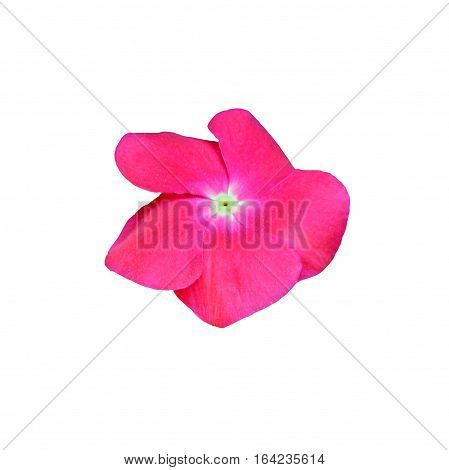 Pink impatiens flower isolated on white background.