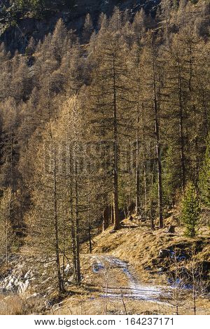 Path on the river Ova de Roseg in Switzerland