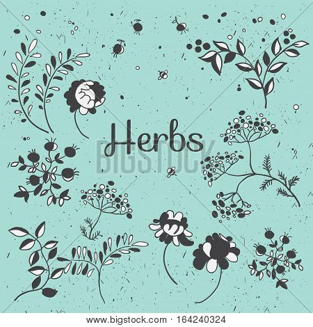 Herbs and flowers set. Hand drawn plants. Vector botanical illustrations. Floral sketches