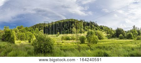 bright sunlight on the Eifel meadow with forest in background
