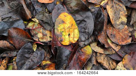 colorful fallen autumn leaves lying on the ground