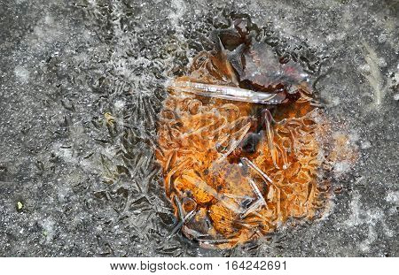 fallen orange leaves in ice frosty winter