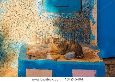 Cat On A Porch In Sidi Ifni, Morocco