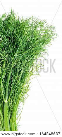 fresh dill, isolated  on the white background