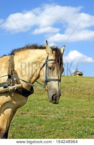 Horse and mill in Pirogovo in the summer, Ukraine