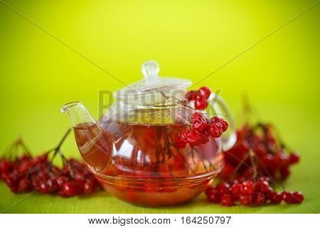 hot tea viburnum in glass pot on a green background