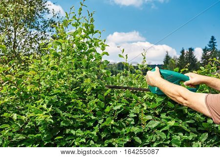 Cutting a hedge with electrical hedge trimmer