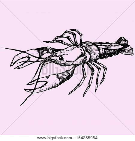 crayfish, lobster, doodle style sketch illustration hand drawn vector