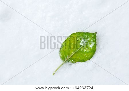 One Green Leaf Fallen on White Snow
