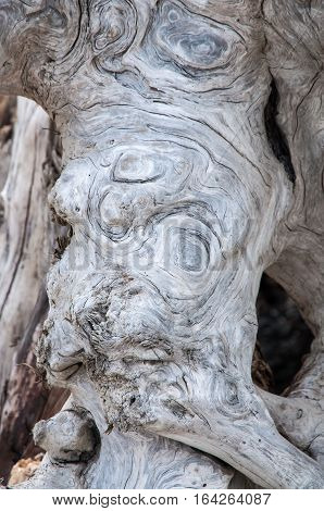 Fragment of a driftwood log with circular knotted patterns