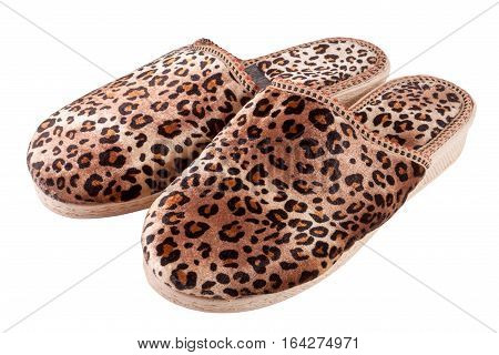 female domestic leopard slippers isolated on white background.