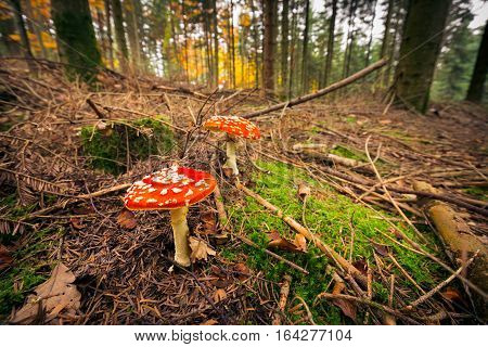Closeup shot of mushrooms growing on the forest floor
